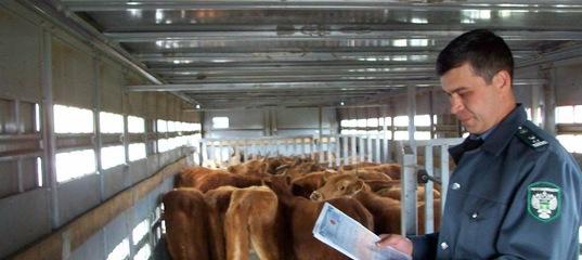 Госдума передает все полномочия по ветеринарному надзору из регионов Россельхознадзору